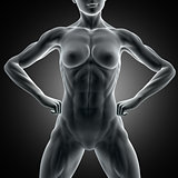 3D muscular female figure with close up of abdominal muscles