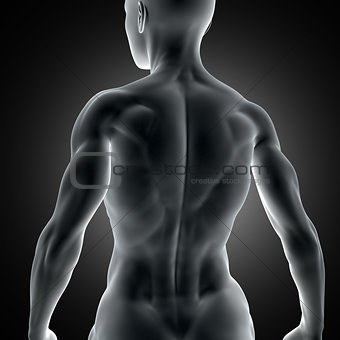 3D muscular female figure with close up of back muscles