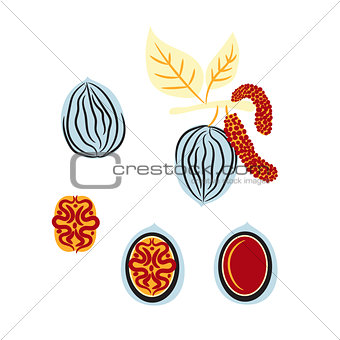 Blue and red stylized walnut vector illustration.