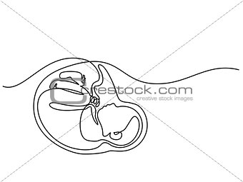Baby in womb on the white background
