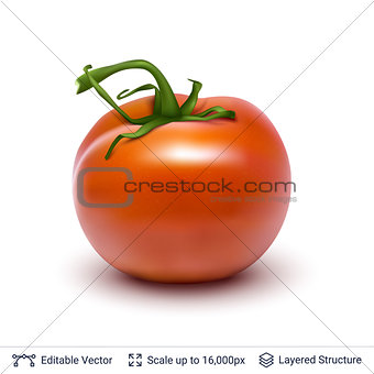 Tomato isolated on white.