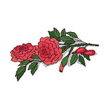Isolated clipart Rose