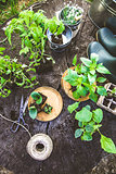 Garden with tools