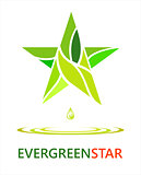 evergreen star