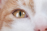 Eye of red kitten