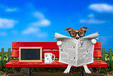 dog reading newspaper on a bench
