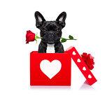 happy valentines dog
