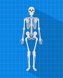 human skeleton with blueprint and long shadow style