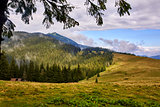 Beautiful scenery in Carpathian mountains. Forested hill at cloudy day in springtime with framing.
