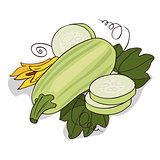 Isolate courgette or zucchini