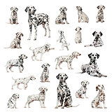 Large collection of Dalmatian, adult, puppy, different position