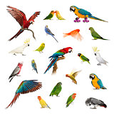 Large collection of bird, pet and exotic, in different position