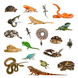 Large collection of reptile, pet and exotic, in different positi