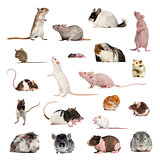 Large collection of rodent, pet and exotic, in different positio
