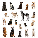 Large collection of dogs, in different position