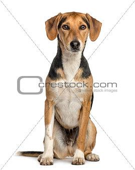 Crossbreed dog sitting, isolated on white