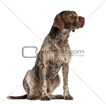 Crossbreed dog looking away, isolated on white