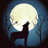 Wolf howls at the moon