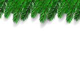 Fir Branch. Symbol of New Year.