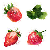 Strawberry on white background. Watercolor illustration