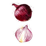 Red Onion on white background. Watercolor illustration