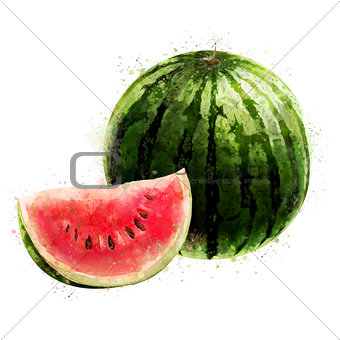 Watermelon on white background. Watercolor illustration