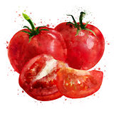 Tomato on white background. Watercolor illustration