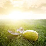 fresh organic lemon with sunlight