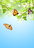 Flowers of apple and monarch butterflies
