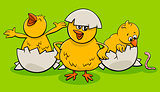 cartoon little chicks hatching from eggs