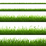 Grass Border Isolated