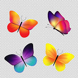 Butterfly Set Isolated