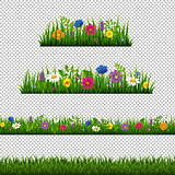 Grass Border With Flower Collection Isolated Transparent Backgro