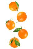 Falling whole orange with leaf isolated on white