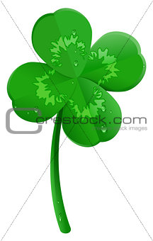 Green lucky four leaf clover symbol of St. Patrick's day