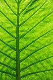 Green ecological concept, green leaf