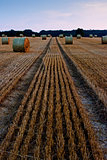 Straw bales on a field after harvest