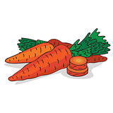 Isolate ripe carrot root vegetable