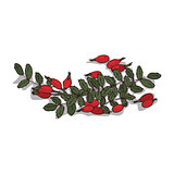 Isolated clipart Rose hips