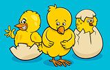 cartoon little chickens hatching from eggs