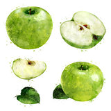 Green Apple on white background. Watercolor illustration