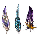 Colorful detailed bird feathers, isolated on white background. Vector illustration.