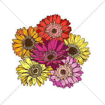 Bouquet of daisies flower on white background. Vector set of blooming floral for wedding invitations and greeting card design.