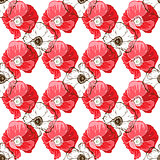 Seamless pattern with poppies flower on white background. Vector set of blooming floral for wedding invitations and greeting card design.