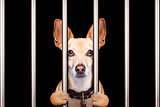 criminal dog behind bars in police station, jail prison, or shel