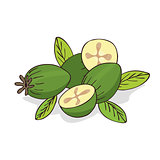 Isolate ripe guava fruits or feijoa