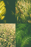 Green nature collage