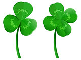 Set green shamrock clover leaf with dew drops. Lucky four leaf symbol of St. Patrick Day