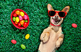 hapy easter dog with eggs