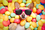 happy easter dog with eggs